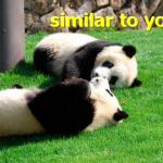 プラグイン「Similar Posts」の設定と使い方 関連記事を表示して滞在時間アップ!